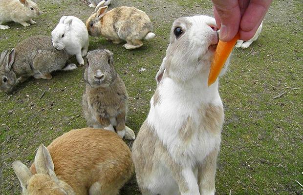 오오쿠노시마 (토끼섬)
