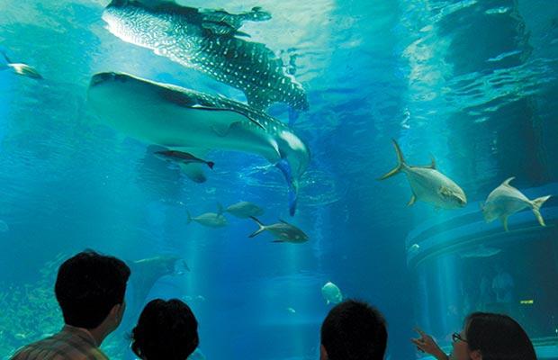 อควาเรี่ยมไคยุคัง (Osaka Aquarium Kaiyukan)