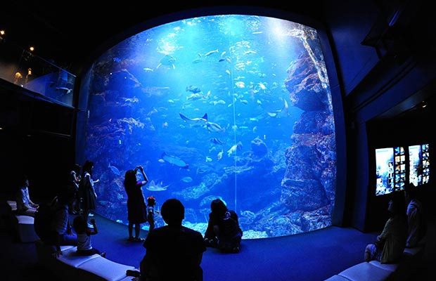 อควาเรี่ยมเกียวโต (Kyoto Aquarium)