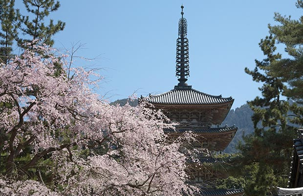 วัดไดโกะจิ (Daigoji Temple)